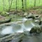 Spring_Creek