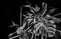 FLOWER SHOW MELBOURNE