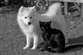 BLACK CAT & WHITE DOG