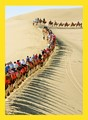 Visitors on long train of camels in Gansu province, China, near DunHuang Mogao caves.
