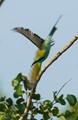 Bird flying off tree