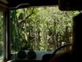 Through the Cypress Swamp