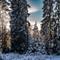 Vinterljus Elmar 50 mm