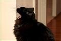 Max_Cat