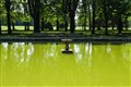 Grinning pond