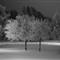 två-frostträd