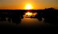 Sunrise in the swamp