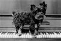 Luc van Beethoven