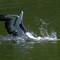 Pelicanfishing01032020_047v2