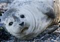 seal_0148