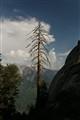 Lone dead tree