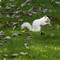 White squirrel.