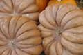 unusual pumpkins for sale