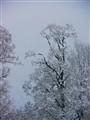 fractal_tree