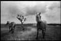 landskab med heste