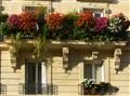 Flowers on balconies