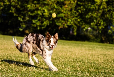 running dog-068