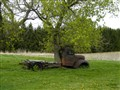 """Tree """"Truck"""""""