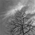 Tree_2250(BW)