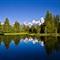 Trees  in beaver pond Schwabackers landing for upload