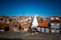 In the beautiful city of Porto this Seagul was striking a pose for me in front of the old city.