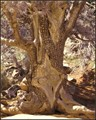 Oak Creek Tree Trunk