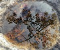 Rock Puddle