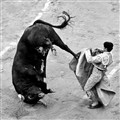 Bull Warrior