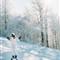 Ski Predeal Film Fuji ieftin ISO200 Rollei 35B -14