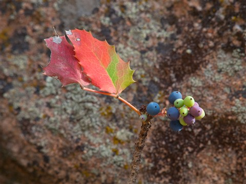 Colorful berries and leaves (1 of 1)