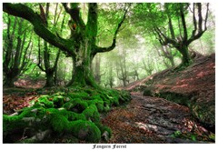 Fangorn Forest