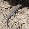 Burkett Lake and Vantage Reptiles-20160917-0124