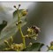 Garden Bees_P4057292