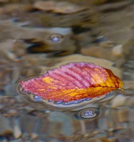 Water Fall 1b _