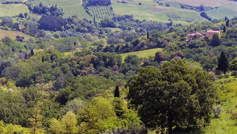 Green Valley in Tuscany