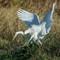 Egret vs Snake