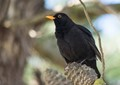 Black bird in tree