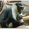 R1-7993-monkeys-2-sm