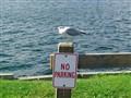 seagullsm2