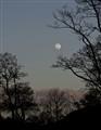 Moonrise & Aspens