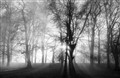 Mist, Sun and Trees.