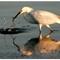 Various-Birds-2014-(71)