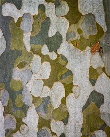 Camouflage? Bark