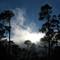 Whispering Pines ©2008 Derek Dean