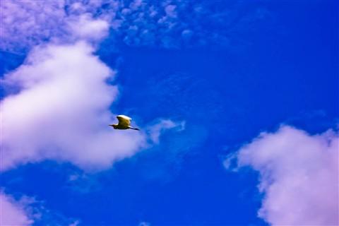 crane flying b4