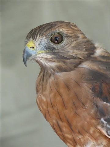 Hawk 1314 1024