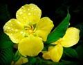 Wet yellow