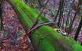 mossy log, NSW