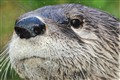 otter up close