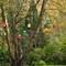 2014-04-27 Eastwoodhill 020 (1600x1183)
